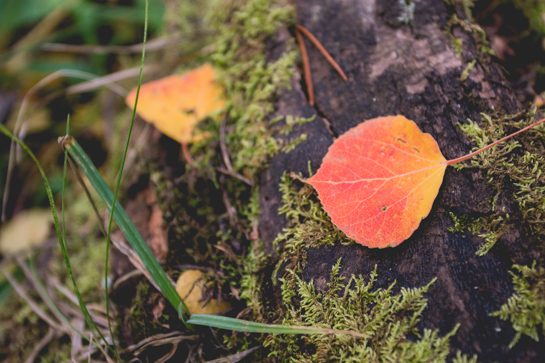 nature healing wellness