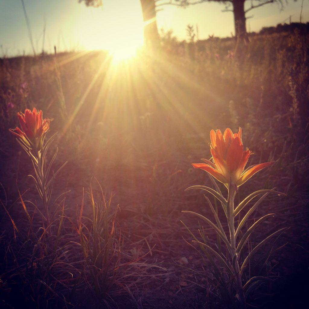 Deep relaxation healing audio meditation reiki Katy Moses